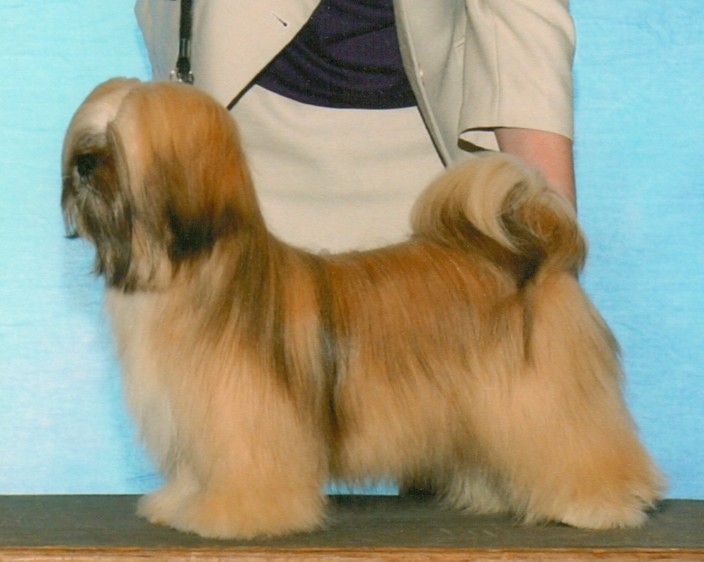 Dog shown from side.