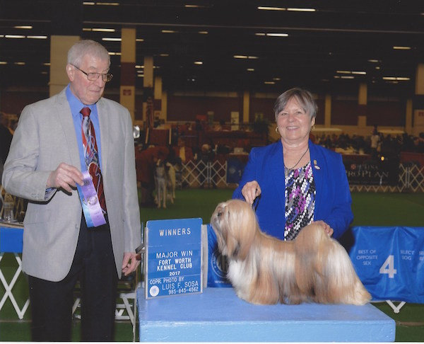 show photo of gold lhasa apso