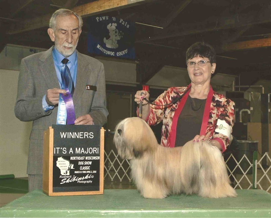 Lhasa at dog show